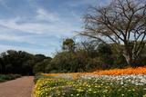 Spring flowers in Kirstenbosch