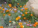 Skilpad Flowers