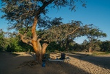 Pleasant camping area on the riverbed
