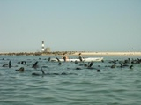 Pelican Point seal colony