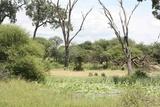 Landscape in Mahango
