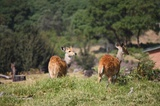 There are plenty of bushbuck