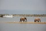 Kariba Elephants