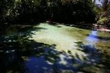 Kapishya Hot Spring