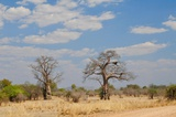 The twin Baobabs, an important landmark in the south
