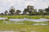 Khwai River Jan 2012