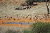 Gharagab Waterhole Oct 2011