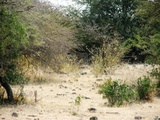 Difficult to see the Leopard in the middle of the picture