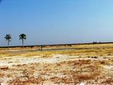 Typical landscape at Etosha