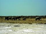Elephants at a pan