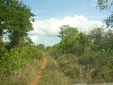 Road to Zinave from the North East - Covane