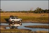 Savuti Canal Crossing May 2013