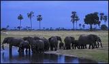 Hwange elephants