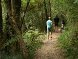Jubilee Creek Forest Walk