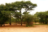 Dqae Qare Camping