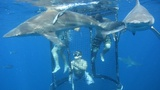 Shark Cage Diving, KZN