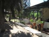 Goanikontes Oasis Restaurant - May 2017