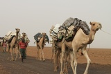 A caravan of camels on their way to Hamedela from the nearby salt mine